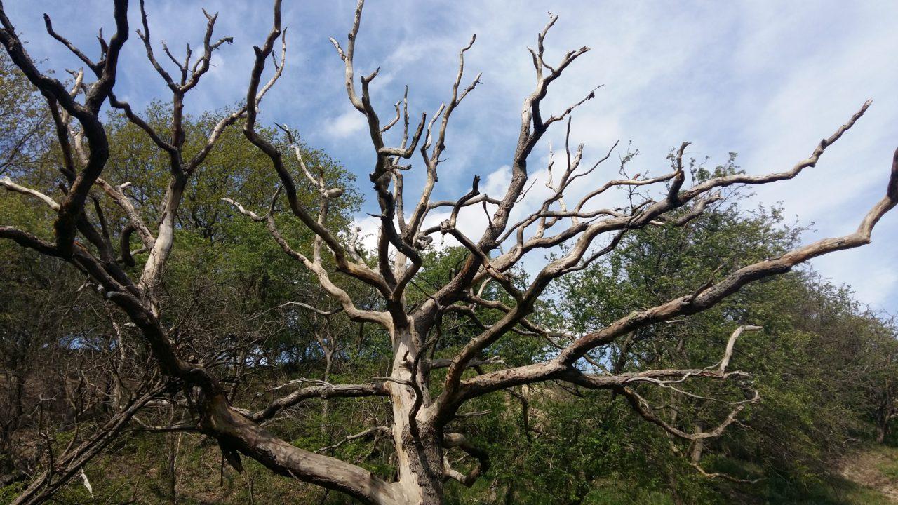 Zie de vergankelijkheid in een dode boom